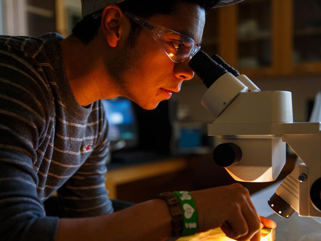 Student working in lab using a microscope.