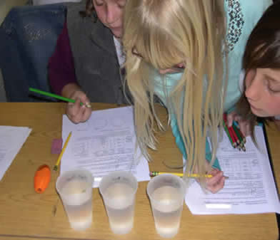 Third grade students counted the duckweed fronds in each cup and later evaluated whether any changes occurred in the two day time period. (photo by CILSA staff)