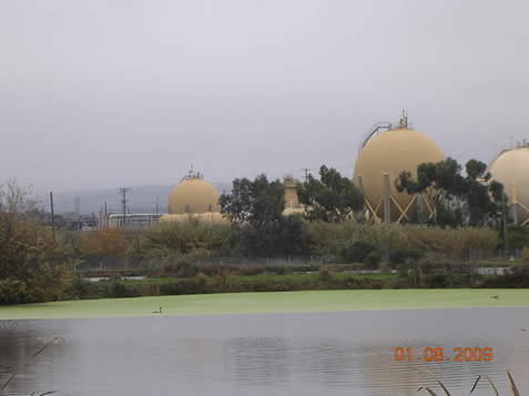 This quiet morning view shows a Mountain View Sanitation District pond with duckweed floating on the surface and the Shell Refinery is in the background. (photo by S. Bachofer)