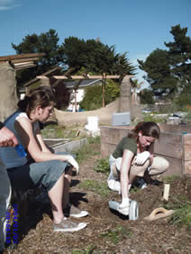 UEI students performed an XRF soil screening study at APC Garden (Spring 2007).