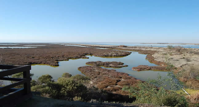 Salt Marsh at Alviso Salt Pond Restoration site (2009 - SJ Bachofer photo)