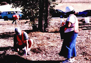 Environmental Chemistry students sampling soils near urban highway and quantifying lead content in soil. (Fall 2004).