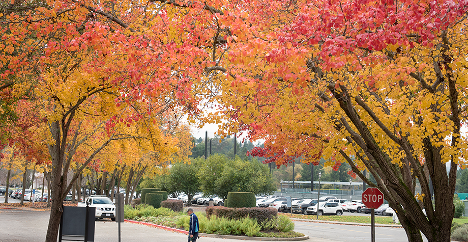 brilliant fall leaves surround the campus