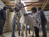 [Horses are known to be healers, animals innately able to connect with humans on a deep, soulful level. SMC's Kalmanovitz School of Education has been using this concept since January to teach fourth- to sixth-graders in Oakland. ]