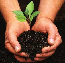 A plant in the soil held by hands.