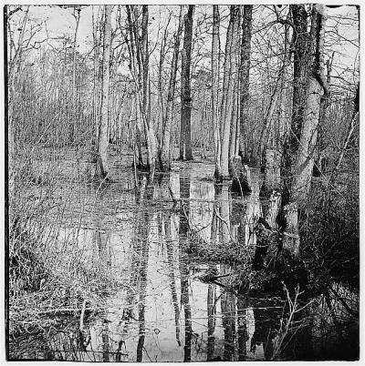 White Oak Swamp