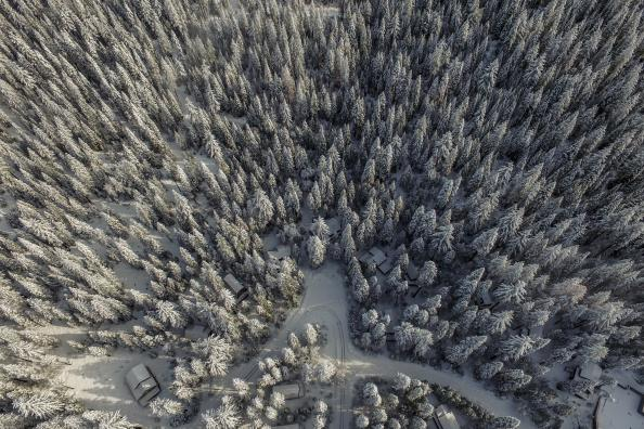 drone pix of winter forest