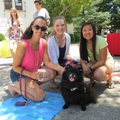 Image for Pet Therapy at the Stress Management Fair