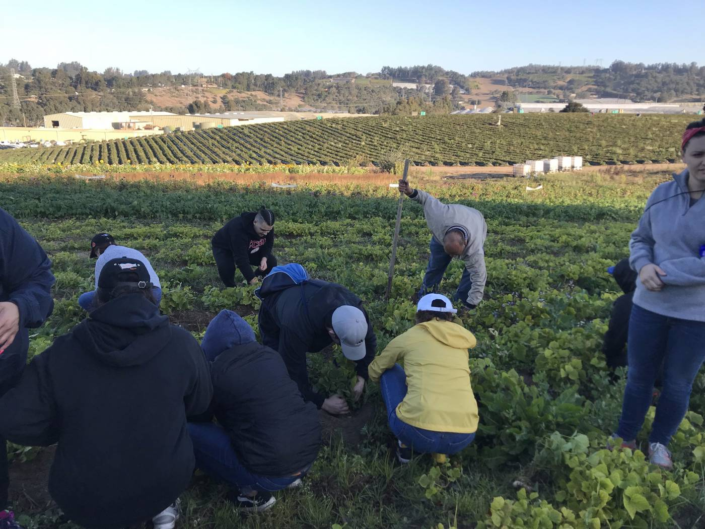 <p>Gaels picking beets at JSM Organics</p>