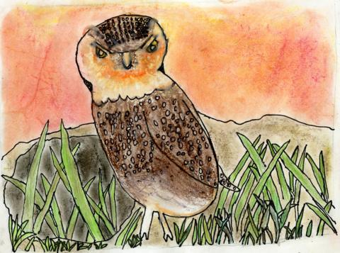 Burrowing Owl, James Sanson, age 8 Watsonville, California Linscott Charter School Teacher: Linda Cover, 2013 River of Words Finalist