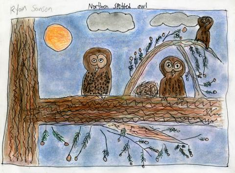 Northern Spotted Owl, Ryan Sanson, age 9 Watsonville, California Linscott Charter School Teacher: Linda Cover, 2013 River of Words Finalist