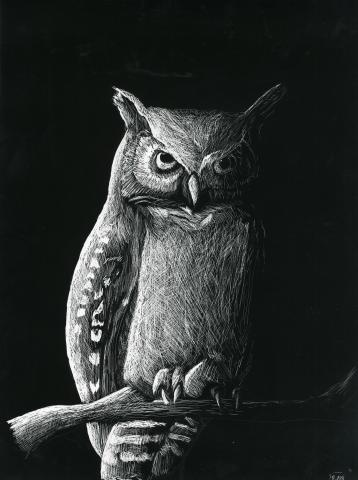 """Tranquil Great Horned Owl"" by Kyle Burton (13), Fairfield, CT (c) 2014 River of Words"