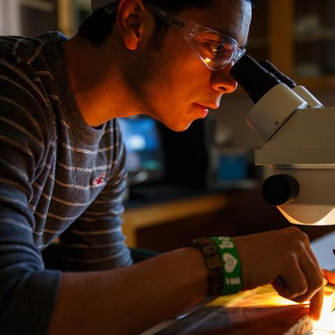 A student gazes into a microscope