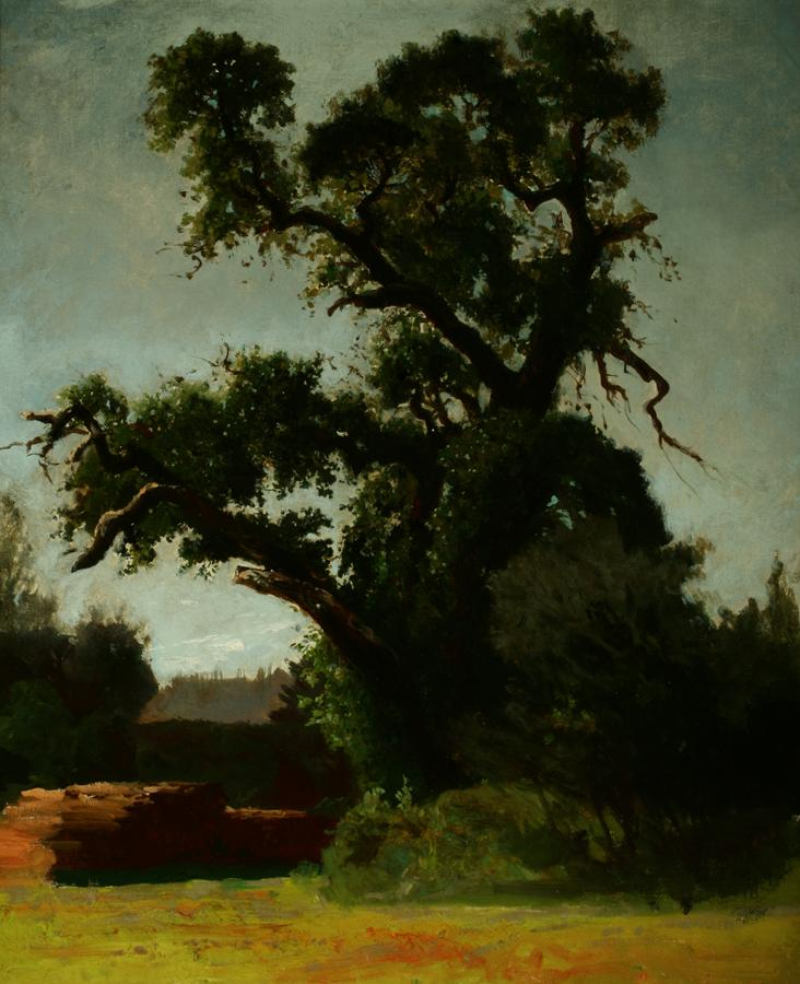 William Keith, Black Oak Study, Lake County, California, circa early 1880s,	 Oil on canvas, 21 9/16 x 18 1/16 inches, Collection of Saint Mary's College Museum of Art,  Gift of Mary McHenry Keith, 1934, 0-70