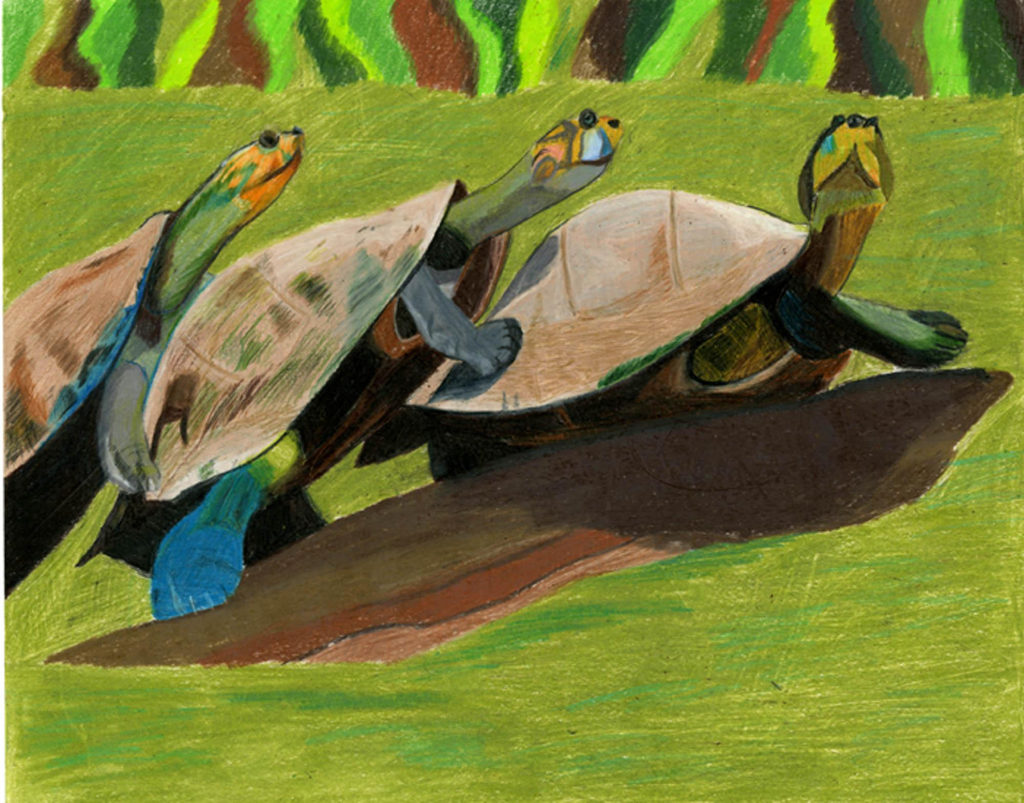 Three Turtles on a Log, Athena Marlin, age 10 Norcross, Georgia  Ska Academy of Art and Design  Teacher: Leng Chang, 2013 River of Words Art Grand Prize Winner, Category II