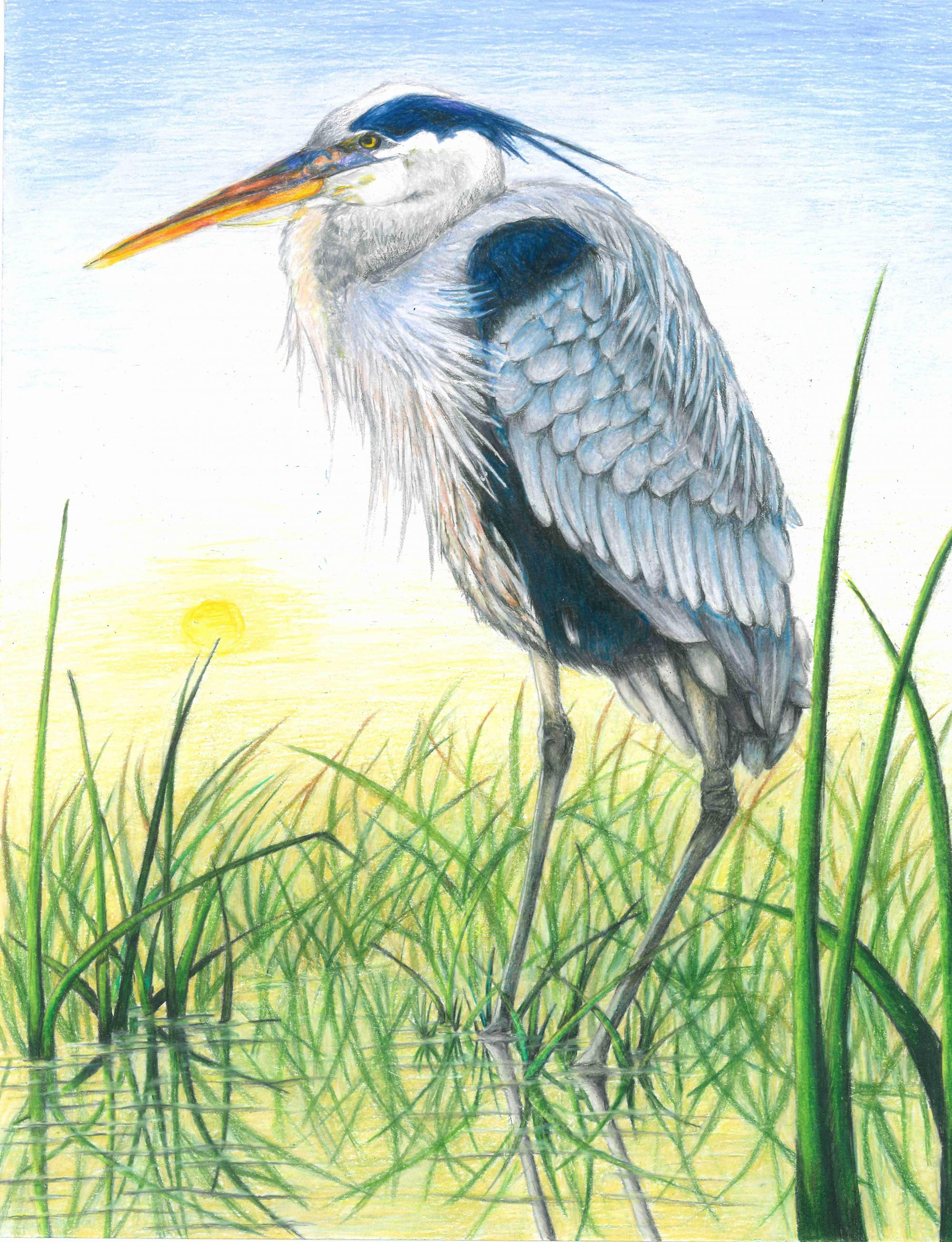 """The Heron"" Yitian Gao, age 14. Fremont, California. United States. River of Words 2018 Finalist."
