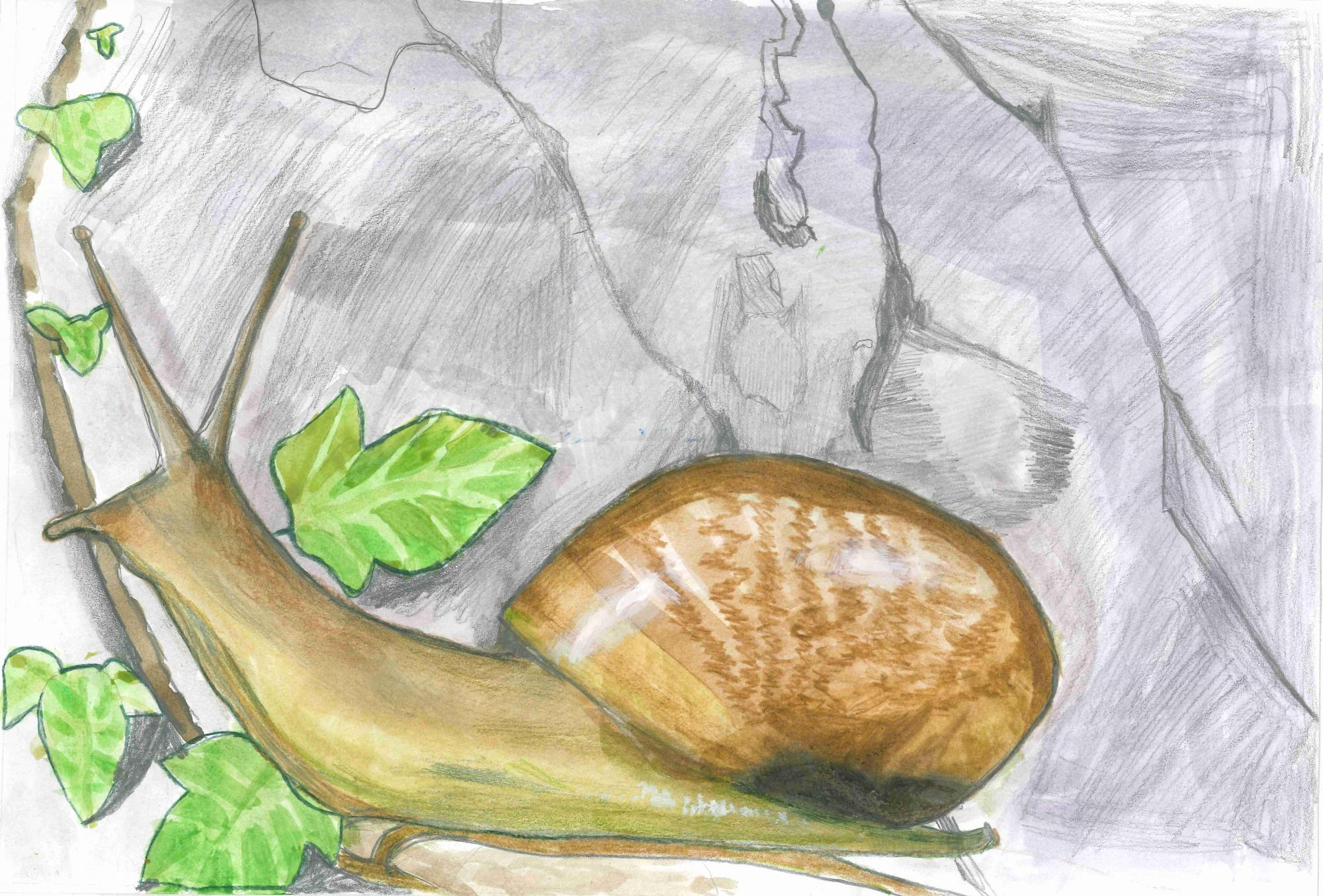 """Land Snail"" Ethan Kim, age 7. Little Neck, New York. United States. River of Words 2018 Finalist."