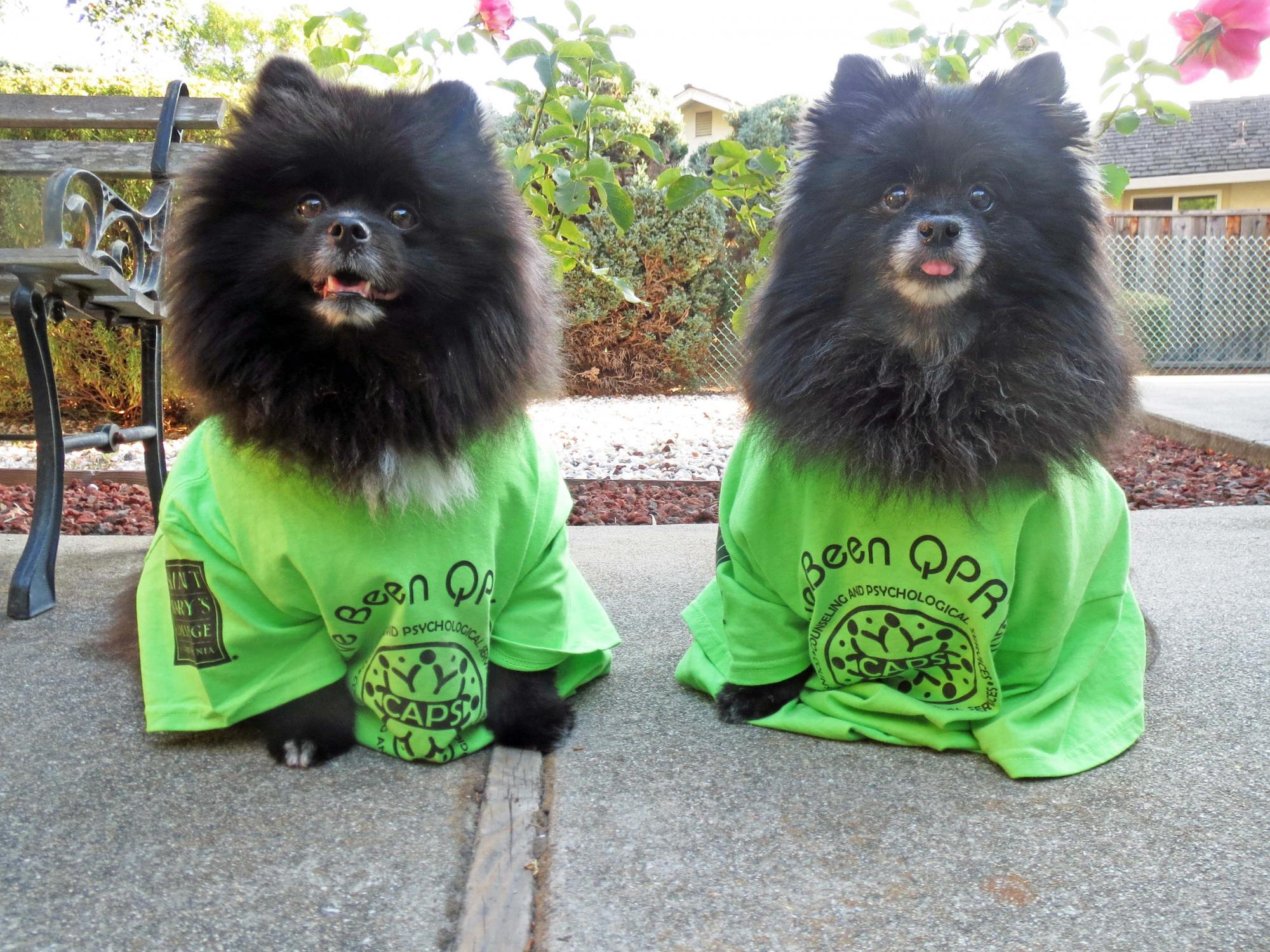 Therapy dogs Oscar and Joey in their QPR t-shirts.