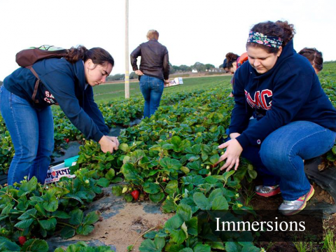 Students on Salinas Immersion pick strawberries. Link to Immersion Page